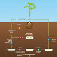 Soil Pro Biostimulant